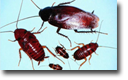 Cockroaches Removal CT