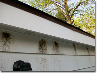 Carpenter Bees In Gutter New Haven Bee Removal