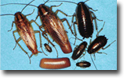 roach Exterminators in CT