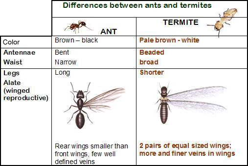 Types Of Ants With Wings Universalcouncilinfo