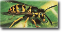 Yellow Jacket Removal, bees nest exterminators